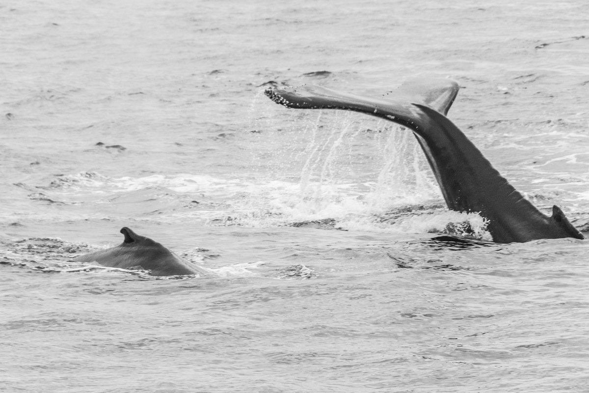mávání velryby